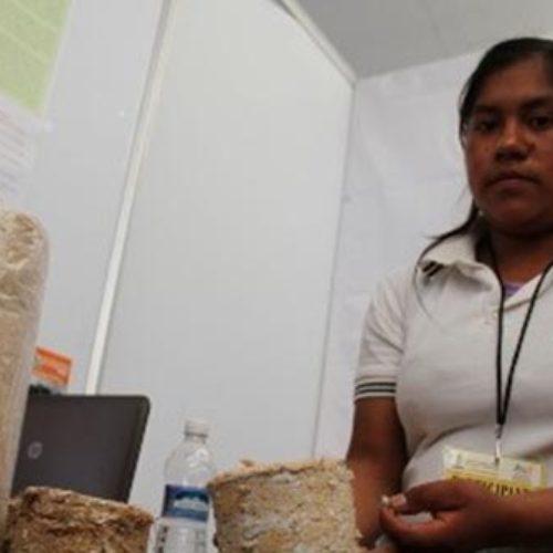 Proyecto 'Leña ecológica' da reconocimiento a estudiantes de Oaxaca