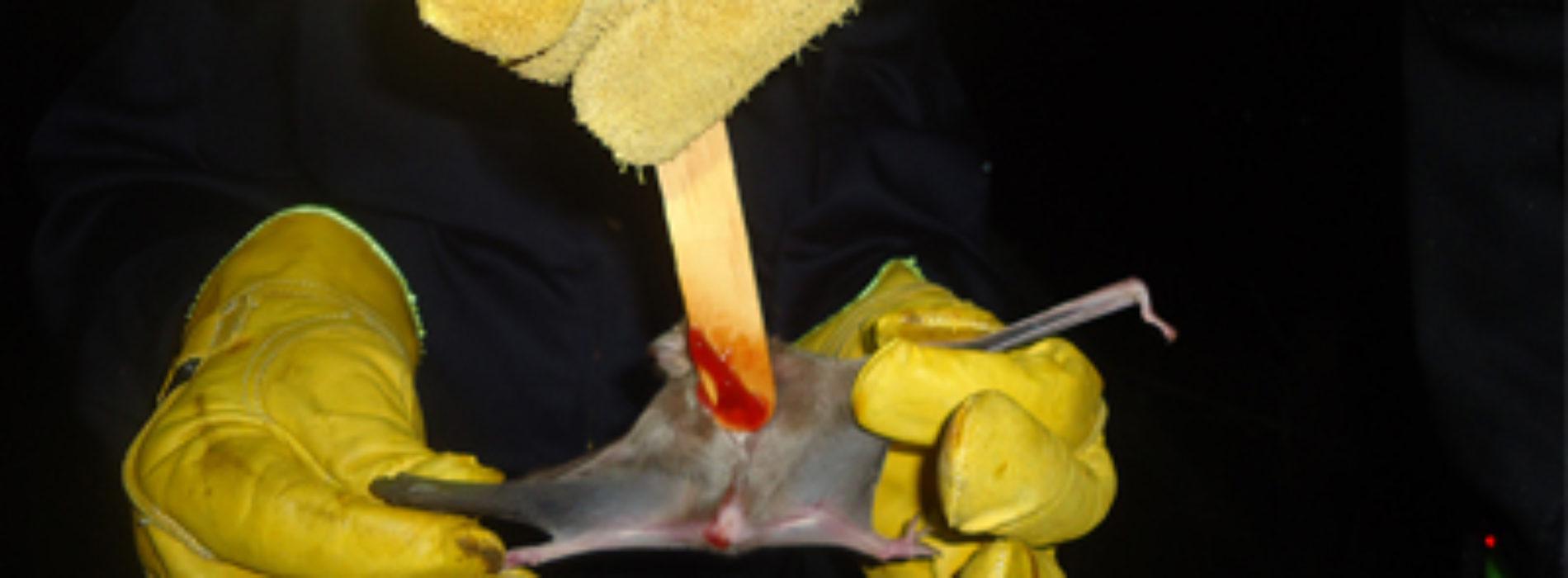 Realizan reunión informativa para control de murciélago hematófago