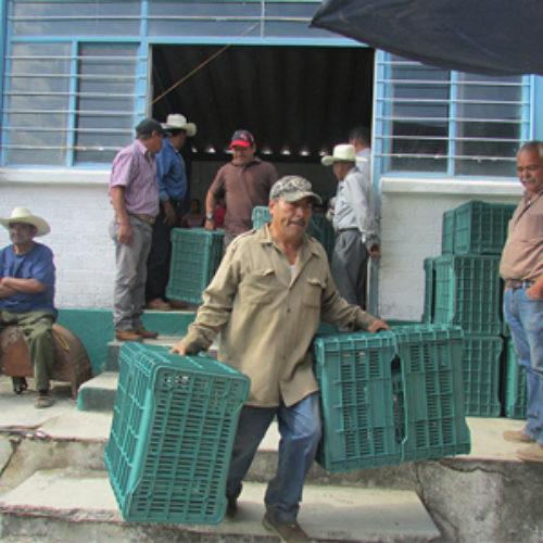 Entrega SEDAPA 2 mil 200 taras a productores de cítricos