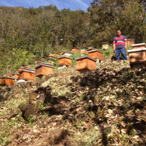 Producción de miel, principal generadora de empleos, riqueza y divisas en Oaxaca